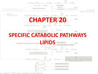 CHAPTER 20 SPECIFIC CATABOLIC PATHWAYS LIPIDS