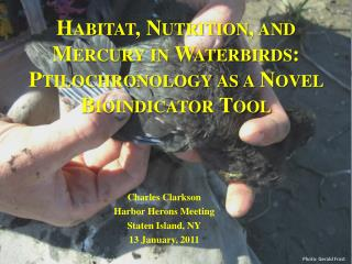Habitat, Nutrition, and Mercury in Waterbirds: Ptilochronology as a Novel Bioindicator Tool