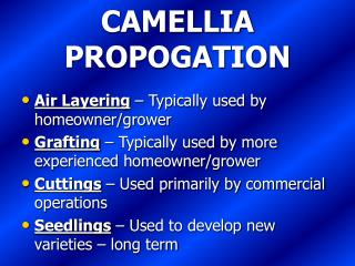 CAMELLIA PROPOGATION