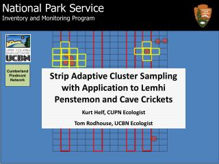 Strip Adaptive Cluster Sampling with Application to Lemhi  Penstemon  and Cave Crickets