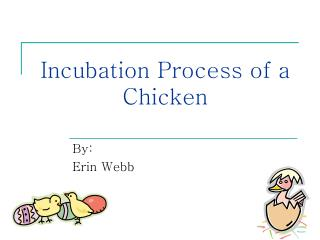 Incubation Process of a Chicken