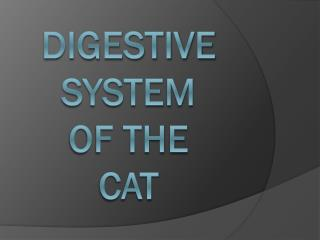 Digestive  System  of the cat