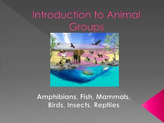 Introduction to Animal Groups