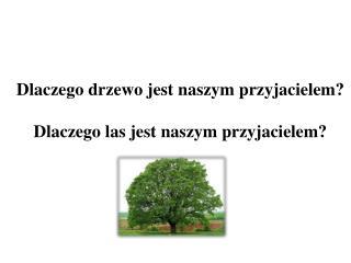 Dlaczego drzewo jest naszym przyjacielem? Dlaczego las jest naszym przyjacielem?