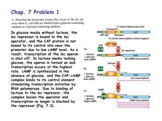 Chap. 7 Problem 1