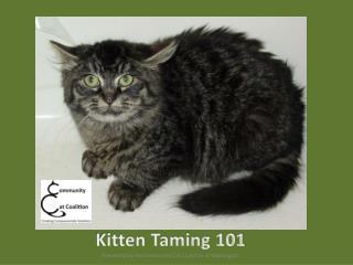 Kitten Taming 101