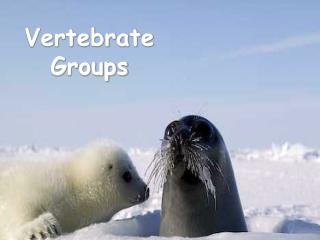 Vertebrate Groups