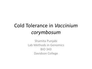 Cold Tolerance in  Vaccinium corymbosum