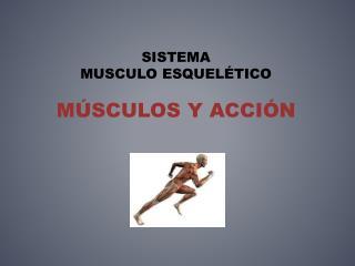 Sistema  Musculo  esquelético  Músculos y Acción