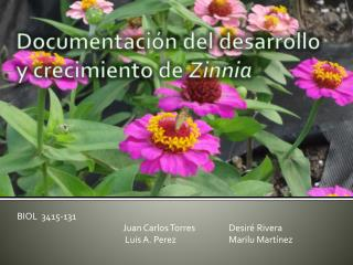 Documentación  del  desarrollo  y  crecimiento  de  Zinnia