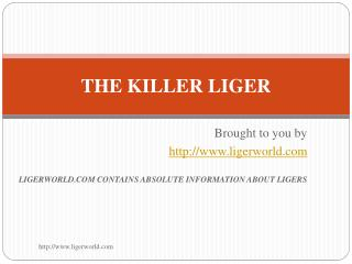 THE KILLER LIGER