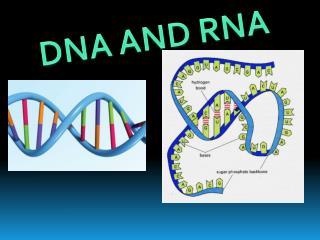 D NA AND RNA