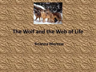 The Wolf and the Web of Life