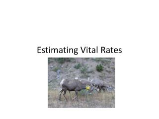 Estimating Vital Rates