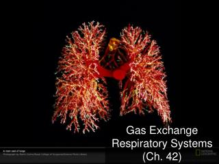 Gas Exchange Respiratory  Systems (Ch. 42)