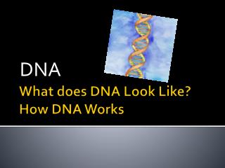 What does DNA Look Like? How DNA Works