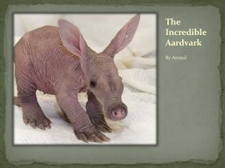 The  Incredible  Aardvark