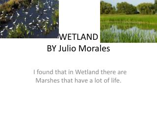 WETLAND  BY Julio Morales