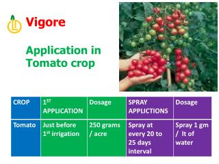 Vigore  Application in Tomato crop