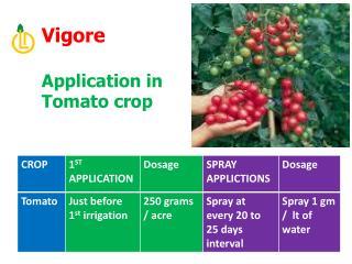 Vigore  Application in Tomato crop