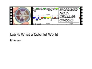 Lab 4: What a Colorful World Itinerary :