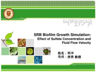 SRB Biofilm Growth Simulation:  Effect of Sulfate Concentration and Fluid Flow Velocity