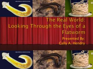 The Real World: Looking Through the Eyes of a Flatworm