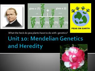 Unit  10 :  Mendelian  Genetics and Heredity