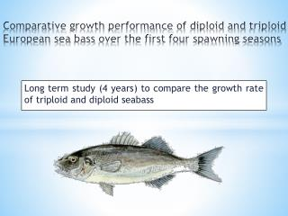 Long  term study  (4  years ) to compare  the growth  rate  of triploid and diploid seabass