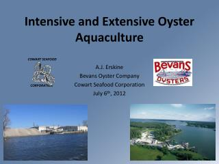 Intensive and Extensive Oyster Aquaculture