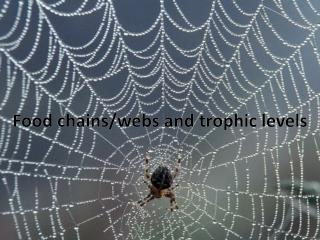 Food chains/webs and  trophic  levels