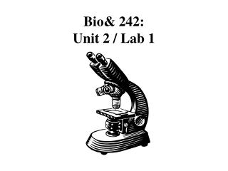 Bio& 242:  Unit 2 / Lab 1