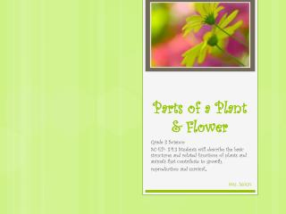 Parts of a Plant & Flower