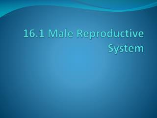 16.1 Male Reproductive System