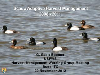 Scaup Adaptive Harvest Management  2008 - 2011