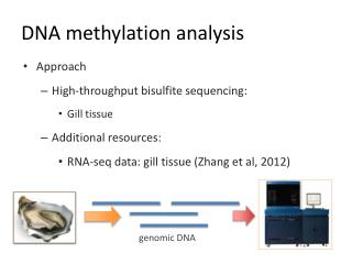 DNA methylation analysis