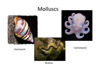 Molluscs