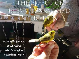 The Effect of  Elevation  on Bird Migration