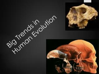 Big Trends  in Human Evolution