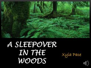 A Sleepover In The Woods