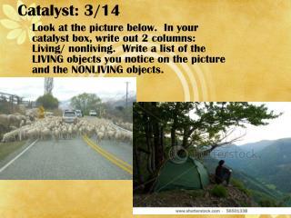 Catalyst: 3/14