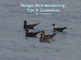 Pelagic Bird Monitoring:  Tips & Guidelines Dipu Karuthedathu