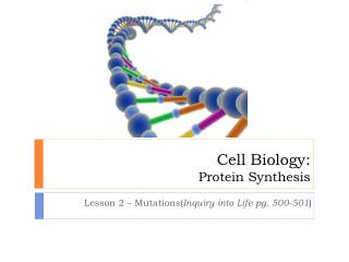 Cell Biology: Protein Synthesis
