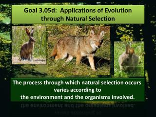 Goal 3.05d :   Applications of Evolution through Natural Selection