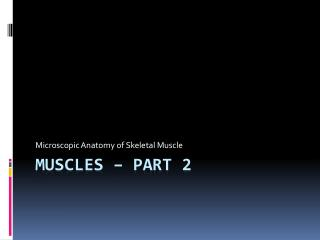 Muscles � Part 2