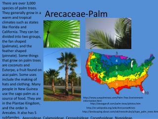 Arecaceae -Palm