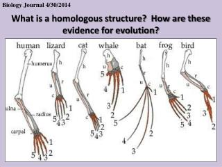 What is a homologous structure?  How are these evidence for evolution?