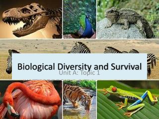 Biological Diversity and Survival