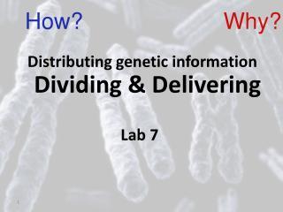 Dividing & Delivering