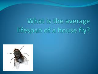 What is the average lifespan of a house fly?